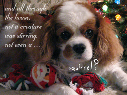 christmas_squirrel_blog.jpg