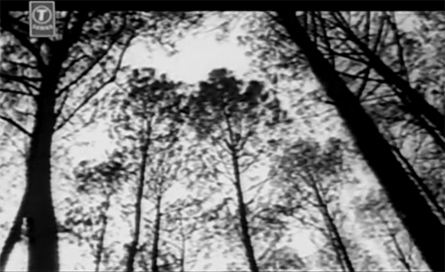 derk_trees.jpg