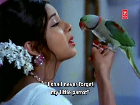 msh_parrot