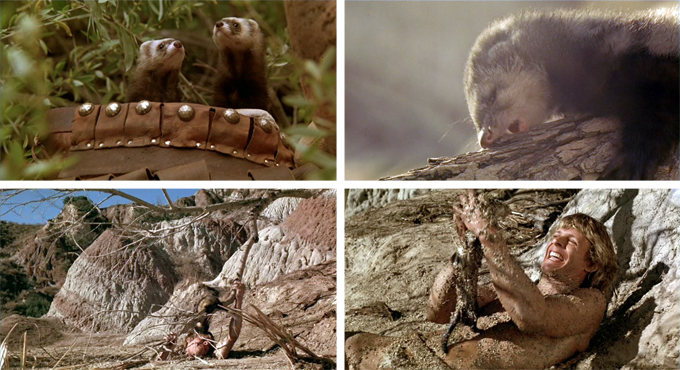 The Beastmaster Ferrets The beastmaster  1982 The Beastmaster Ferrets